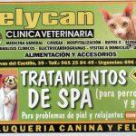 Super negocios para la crisis: SPA para perros y gatos.